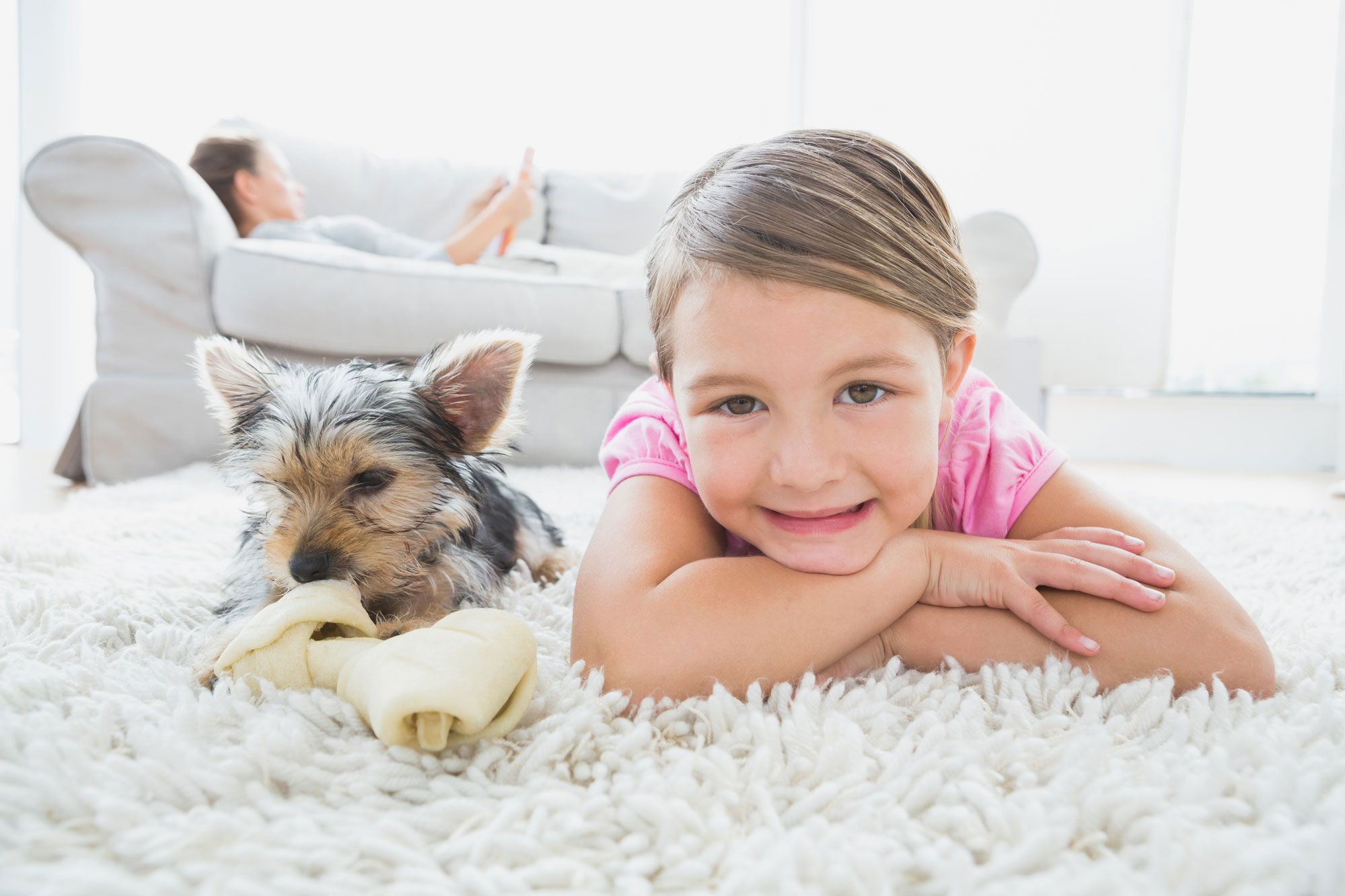 How Often Should You Steam Clean Your Carpet With Pets